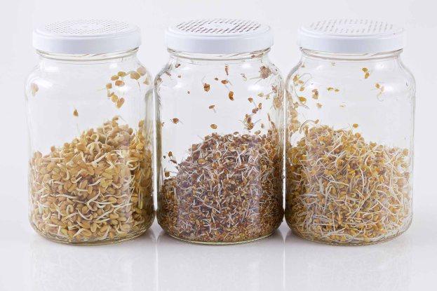 Broto Fácil - kit processo de germinação