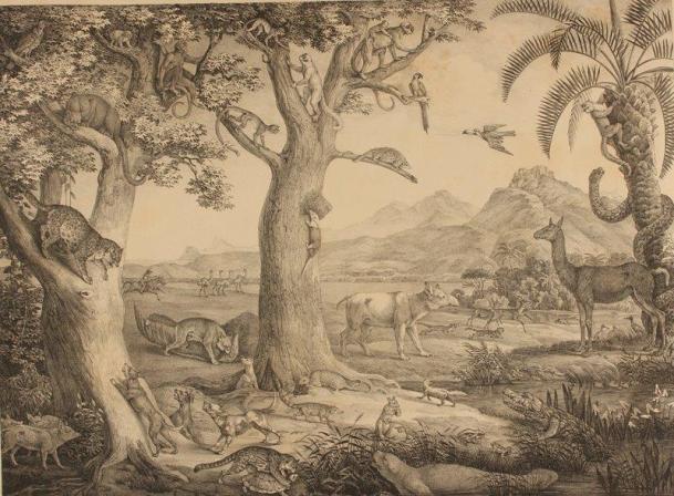 Exposição Spix e Martius - Animais da América tropical, por Spix e Martius