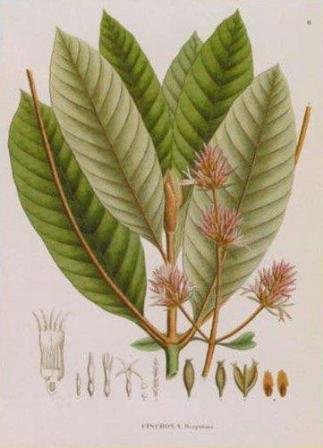 Exposição Spix e Martius - Flora 2